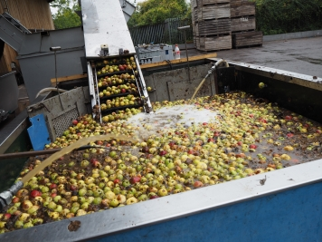 Pressing the Apples